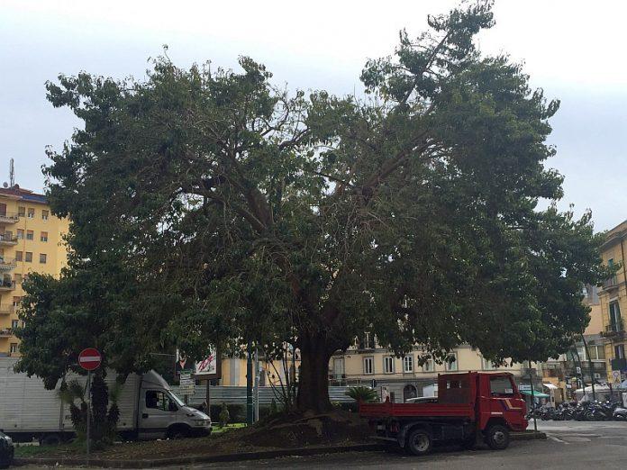 Piazza_degli_Artisti_albero