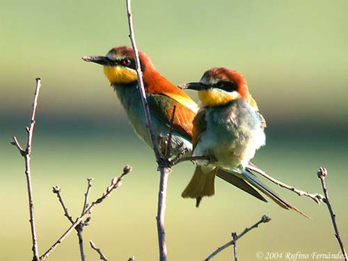 ornitologia5
