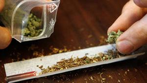 cannabis-3-2