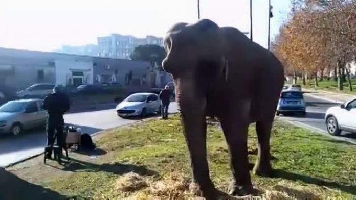 elefante_in_giro_per_scampia