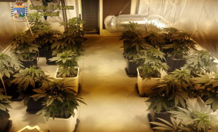 villaricca-serra-marijuana-casa