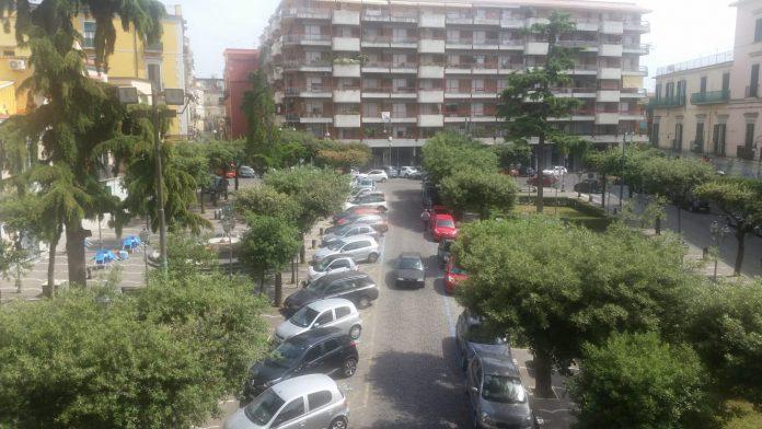 alberi_piazza_municipio