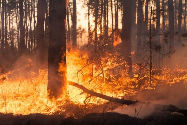come-prevenire-gli-incendi-boschivi-con-la-bella-stagione-1-640x428