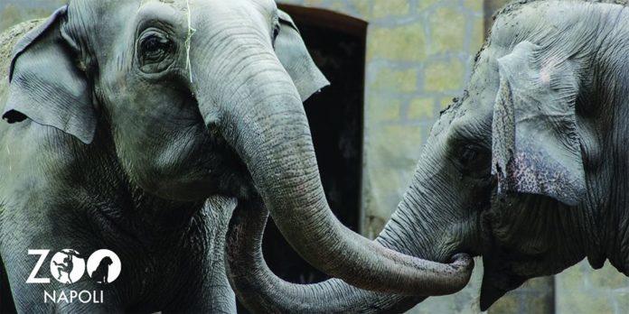 zoo Napoli1