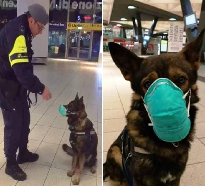 Coronavirus a Napoli: cane con la mascherina, scoppia la bufera sui social